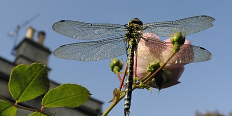 Online  Introduction to Dragonfly ID tickets