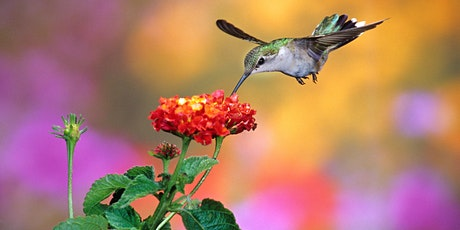 LIVE STREAM: Featured Hummingbird Plant of the Week with Sarah Smith tickets