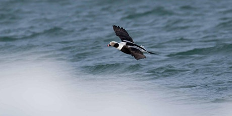 #21in21: Late Fall Lakefront Birding Trip tickets