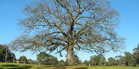 POSTPONED AGAIN! Life is Better with Trees - Tree care for gardeners tickets