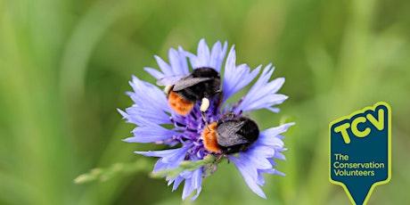 Bee Survey - The Paddock Community Nature Park tickets