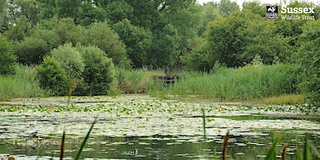 Woods Mill Nature Reserve: Guided Walk & Networking tickets