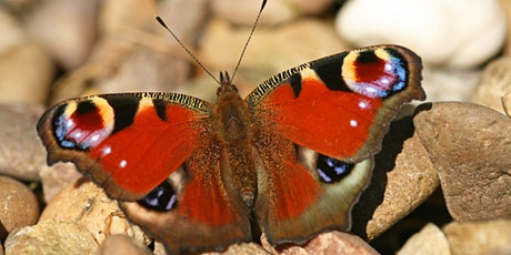 Name that butterfly! Children's workshop at Woolley Firs Tues 3 Aug tickets