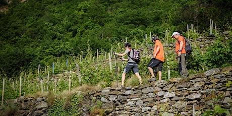 Escursione lungo i vigneti terrazzati biglietti