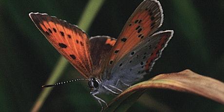 Butterflies Through Time - A guided walk tickets