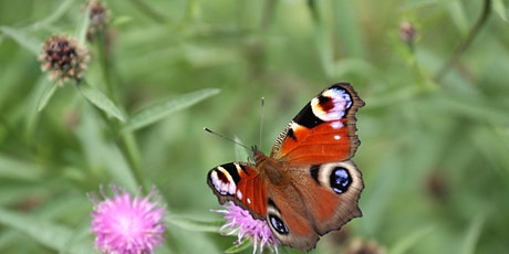 Family: Brilliant Butterfly Walk tickets