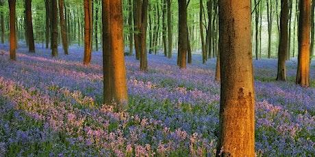 Blairhall Bing Woodland - a new landscape tickets