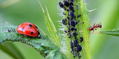 Good Bugs, Bad Bags on Edible Plants