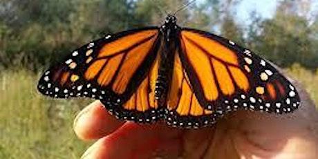 Monarch Tagging tickets