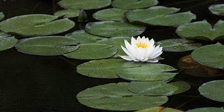 2021 South Carolina Aquatic Plant Management Society Conference tickets