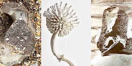 "Thames Festival  Art-Talk ""Collecting Rituals: Bones, Teeth, Oyster Shells"" tickets"