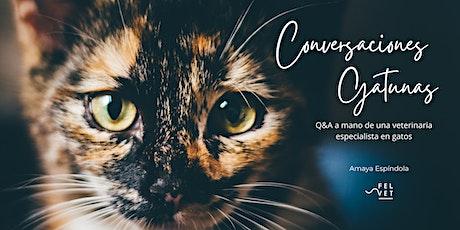 Conversaciones gatunas: Q&A a mano de una veterinaria especialista entradas