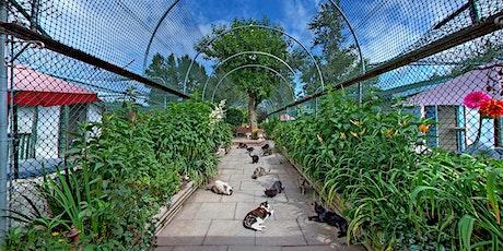 Visit the RAPS Cat Sanctuary tickets
