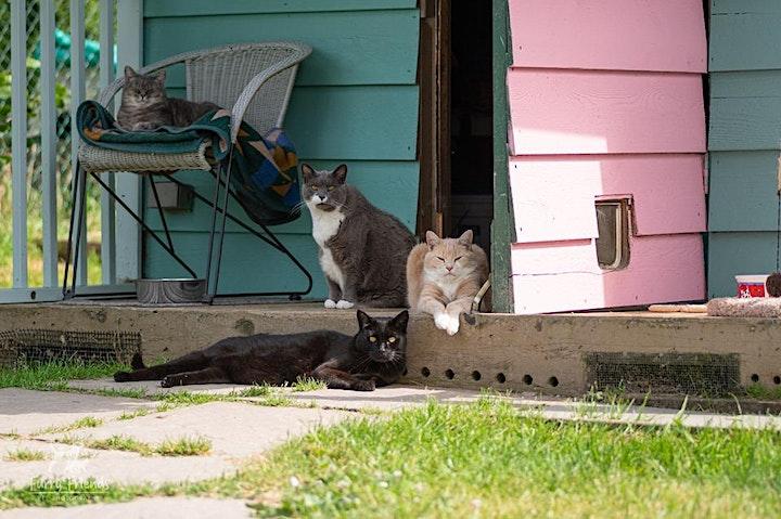 Visit the RAPS Cat Sanctuary image