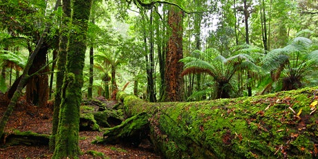 'Forest Defenders' Film for the Takayna/ Tarkine Forest tickets
