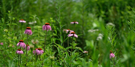 Flower Pressing: Native Plants and Pollinators tickets