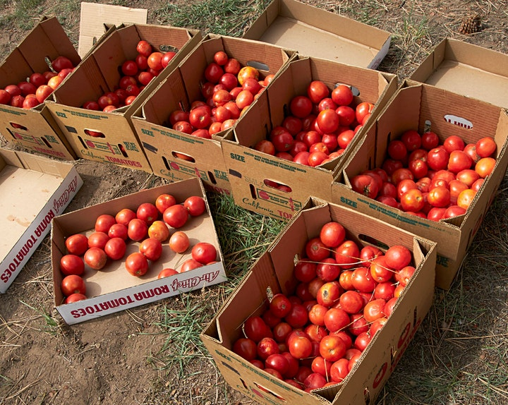 The Great State Tomato War - 2021 image