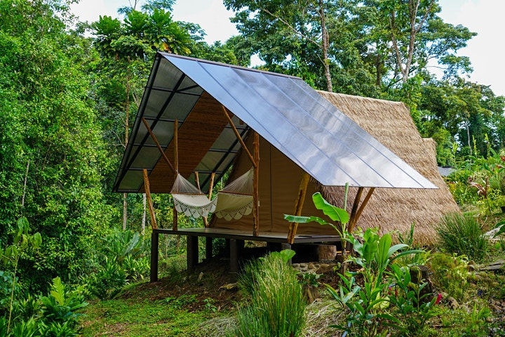 New Years Eve Activating the Voice Costa Rica Retreat: Earth Medicine image