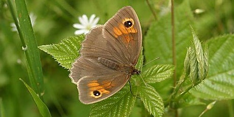 Guided butterfly walk at Millhoppers Pasture Reserve nr Wilstone tickets