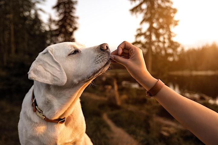 Image pour Initiation à l'approche de la naturopathie animale