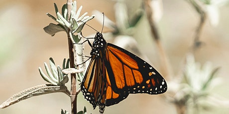 Monarchs and Milkweed Workshop tickets
