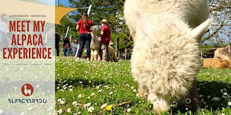 Meet My Alpaca: the Experience 25 luglio tickets