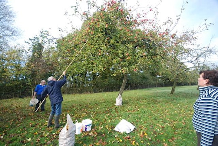 Open Orchard Day - with Apple Picking, Cider and Sausages. (Sat 18th Sept) image