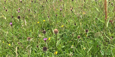 How to Get Involved in Restoring Shropshire's Verges tickets
