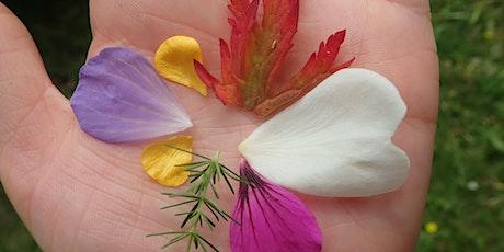 Nature's Colour Palette tickets