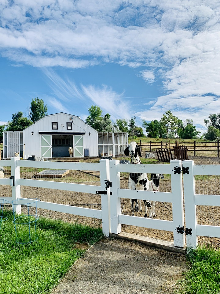 Brunch at the Rescue Farm image