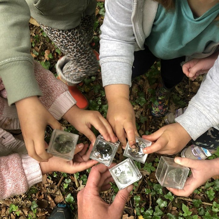 Forest School Summer Camps image