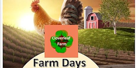 Farm Days Meadow Maze Sunset Tour (Bonfire Edition) tickets