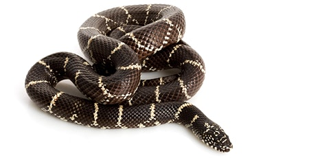 Living with Snakes in North Georgia tickets