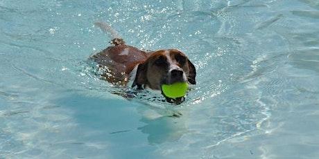 Annual Doggie Splash - Large Dog Session 2 tickets