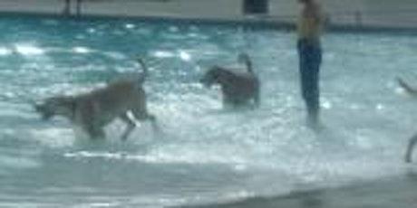 Annual Doggie Splash - Large Dog Session 1 tickets