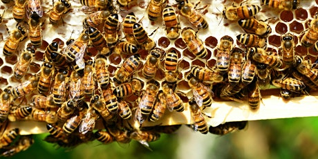 Educational Bee Workshop Hosted by a Beekeeper in Mexico City tickets