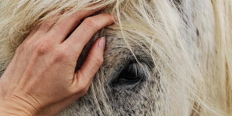 Equine Therapy Healing in Guided Horse Meditation tickets