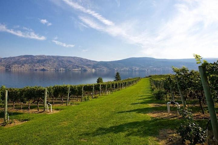Veuve Clicquot in the Vines - 130-330p image