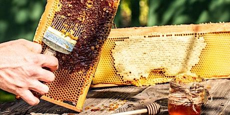 Boroondara Bee Series - #3 Beekeeping - beyond the basics tickets