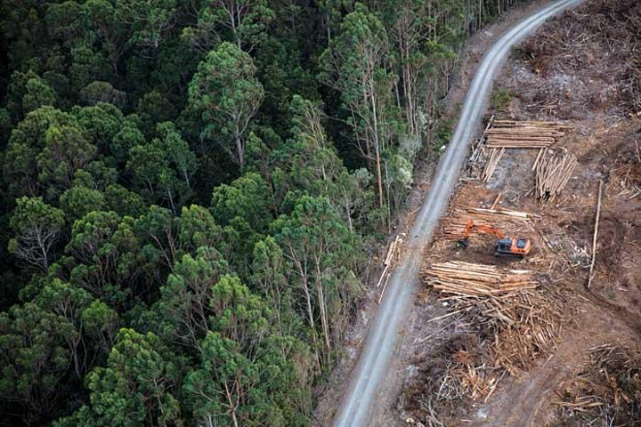 'Forest Defenders' Film for the Takayna/ Tarkine Forest image