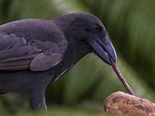 Animal Wisdom: Birds of Strength and Cunning/Mary Lloyd tickets