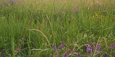 Nature Conservation-Introduction to Verge & Meadow Management-Ransom Hall tickets