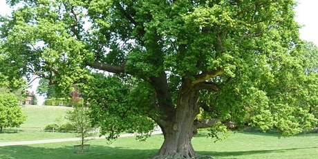 Nature Conservation - Winter Tree Identification- Warsop Parish Centre - CL tickets