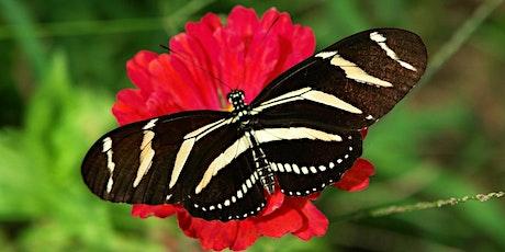 Fluttering Flowers, Gardening for Butterflies tickets