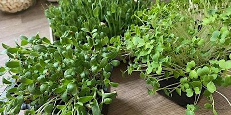 Indoor Edible Garden tickets