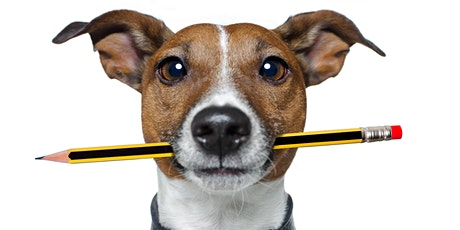 Doggie Night School Recall Training - 6 Week Course tickets