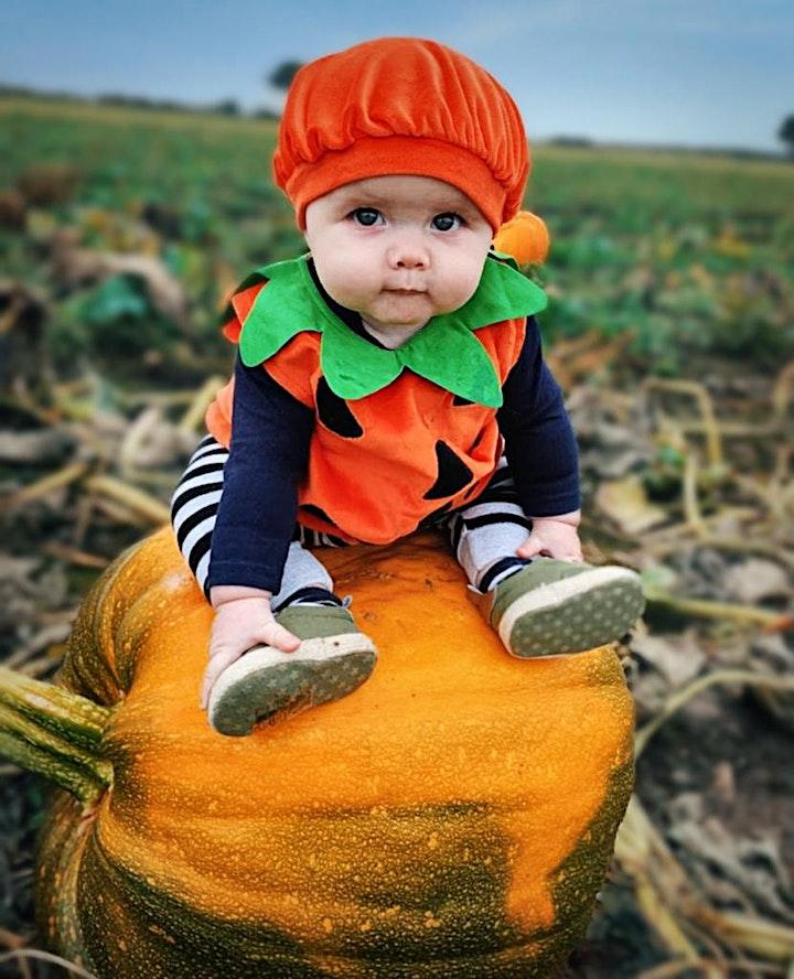 Beech House Farm Pumpkins PYO 2021 image