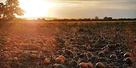 Beech House Farm Pumpkins PYO 2021 tickets