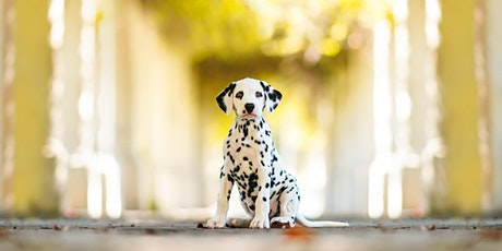Pet Photography Lecture and Hands-On Workshop with Anabel DFlux tickets