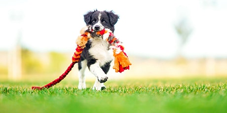 Pet Photography Lecture and Hands-On Workshop with Anabel DFlux - Santa Ana tickets